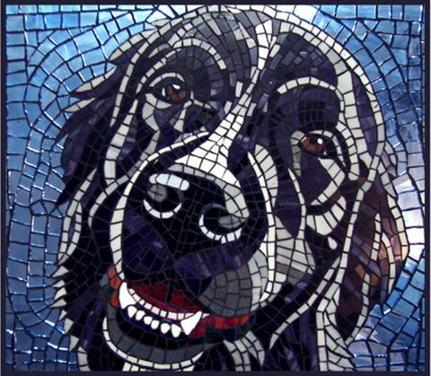 """cachorro creche daycare dog dogs cães cão animal animals são paulo sp dogplace dogresort dogspa dogfun piscina fisioterapia reabilitação doggourmet gourmet dogrelax """"esteira aquática"""" acupuntura cromoterapia sofás almofadas relaxamento hotel hospedagem brinquedões quiosque lago curso recreação recreacionistas comportamentalismo comportamento socialização prevenção dicas blog saúde"""