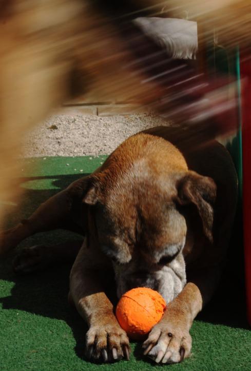 """cachorro creche daycare dog dogs cães cão animal animals são paulo sp dogplace dogresort dogspa dogfun piscina fisioterapia reabilitação doggourmet gourmet dogrelax """"esteira aquática"""" acupuntura cromoterapia sofás almofadas relaxamento hotel hospedagem brinquedões quiosque lago curso recreação recreacionistas comportamentalismo comportamento socialização prevenção dicas blog"""