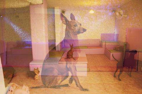 """cachorro creche daycare dog dogs cães cão animal animals são paulo sp dogplace dogresort dogspa dogfun piscina fisioterapia reabilitação doggourmet gourmet dogrelax """"esteira aquática"""" acupuntura cromoterapia sofás almofadas relaxamento hotel hospedagem brinquedões quiosque lago curso recreação recreacionistas comportamentalismo comportamento socialização prevenção dicas italiano galgo"""