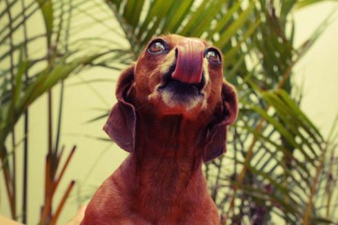 """cachorro creche daycare dog dogs cães cão animal animals são paulo sp dogplace dogresort dogspa dogfun piscina fisioterapia reabilitação doggourmet gourmet dogrelax """"esteira aquática"""" acupuntura cromoterapia sofás almofadas relaxamento hotel hospedagem brinquedões quiosque lago curso recreação recreacionistas comportamentalismo comportamento socialização prevenção dicas basset daschund"""