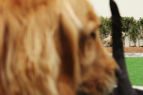 """cachorro creche daycare dog dogs cães cão animal animals são paulo sp dogplace dogresort dogspa dogfun piscina fisioterapia reabilitação doggourmet gourmet dogrelax """"esteira aquática"""" acupuntura cromoterapia sofás almofadas relaxamento hotel hospedagem brinquedões quiosque lago curso recreação recreacionistas comportamentalismo comportamento socialização prevenção dicas cocker spaniel golden labrador whippet sharpei boston terrier bulldog frances boxer poodle"""