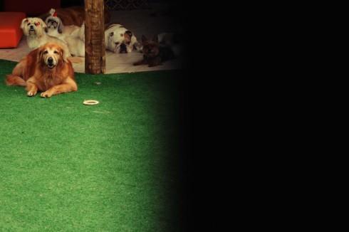 """cachorro creche daycare dog dogs cães cão animal animals são paulo sp dogplace dogresort dogspa dogfun piscina fisioterapia reabilitação doggourmet gourmet dogrelax """"esteira aquática"""" acupuntura cromoterapia sofás almofadas relaxamento hotel hospedagem brinquedões quiosque lago curso recreação recreacionistas comportamentalismo comportamento socialização prevenção dicas golden bulldog lhasa apso shitzu"""