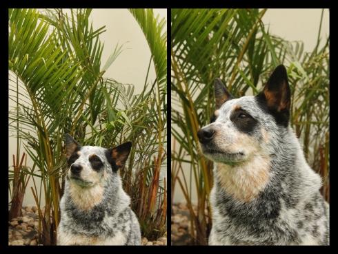 """cachorro creche daycare dog dogs cães cão animal animals são paulo sp dogplace dogresort dogspa dogfun piscina fisioterapia reabilitação doggourmet gourmet dogrelax """"esteira aquática"""" acupuntura cromoterapia sofás almofadas relaxamento hotel hospedagem brinquedões quiosque lago curso recreação recreacionistas comportamentalismo comportamento socialização prevenção dicas"""