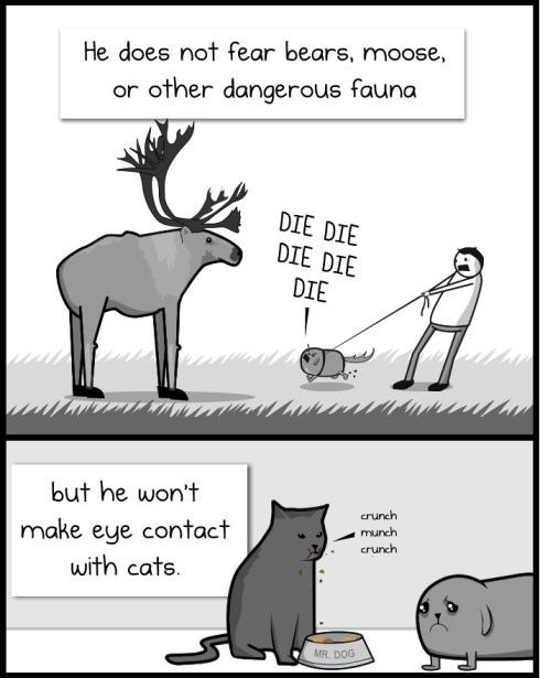 Ele não tem medo de ursos, alces ou outros perigos da fauna, mas ele não estabelece contatos visuais com o gato
