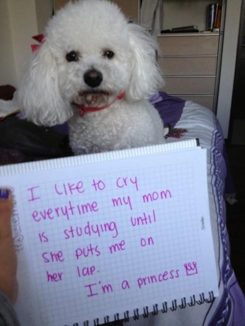 Eu gosto de chorar todas as vezes que minha mãe começa a estudar... até ela me colocar no colo. Eu sou uma princesa