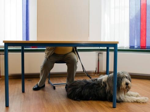 Votação na Alemanha, os cães são bem vindos.