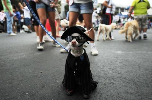 O cão e a capa