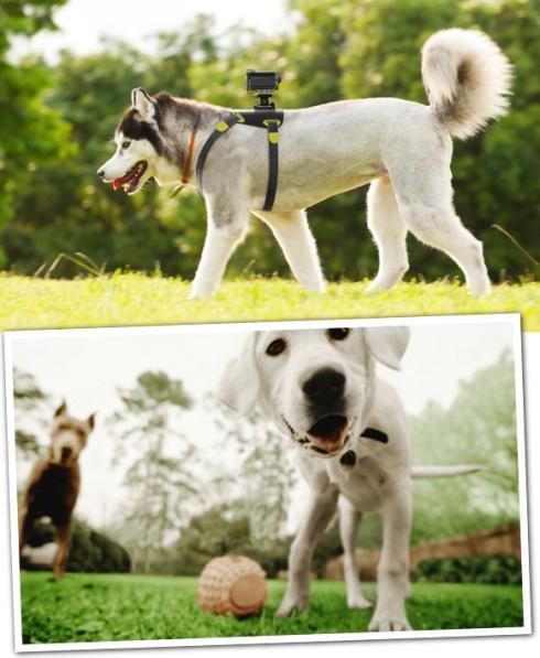 Camera-canina-bem-legaus-1